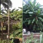Thơ Hạnh Đào: Vườn Trái Đầu Mùa